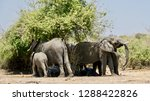 a family of elephants           ... | Shutterstock . vector #1288422826