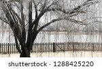 cropped view of a willow tree... | Shutterstock . vector #1288425220