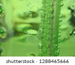 bubble at straw  carbonated... | Shutterstock . vector #1288465666