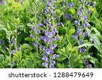 Decadence 'blueberry Sundae' ...