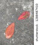 leafs photo object   Shutterstock . vector #1288487410