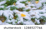 the first snow  late autumn ... | Shutterstock . vector #1288527766