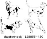 vector drawings sketches...   Shutterstock .eps vector #1288554430