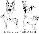 vector drawings sketches...   Shutterstock .eps vector #1288554433