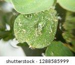 transparent water drops on... | Shutterstock . vector #1288585999