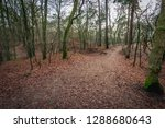 forest trail in a hilly area in ...   Shutterstock . vector #1288680643