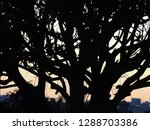 silhouette of intertwined tree...   Shutterstock . vector #1288703386
