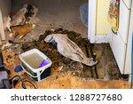 damage home floor in kitchen ...   Shutterstock . vector #1288727680