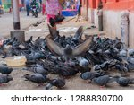 pigeons on the footpath of bow... | Shutterstock . vector #1288830700