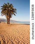 a palm tree on a beach in the... | Shutterstock . vector #128893838