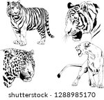 vector drawings sketches...   Shutterstock .eps vector #1288985170
