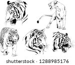vector drawings sketches...   Shutterstock .eps vector #1288985176