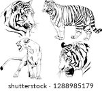 vector drawings sketches...   Shutterstock .eps vector #1288985179