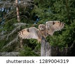 Stock photo long eared owl asio otus sitting on the tree beautiful owl with orange eyes on the tree in 1289004319