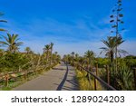 dunes in guardamar del segura... | Shutterstock . vector #1289024203