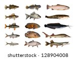 fish | Shutterstock . vector #128904008