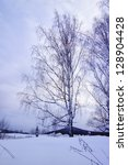 Snowbound Birch On A Winter...