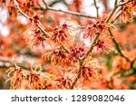 close up of several red flowers ... | Shutterstock . vector #1289082046