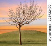 Bare Tree In Park With Dawn Sky