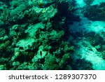 marine life in the red sea. red ...   Shutterstock . vector #1289307370