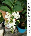 blossom white flowers bouquet... | Shutterstock . vector #1289323810