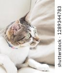cat stare at something   Shutterstock . vector #1289344783