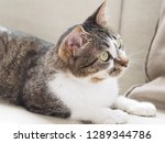 cat stare at something   Shutterstock . vector #1289344786