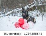 ray working line german...   Shutterstock . vector #1289358646