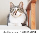 cat sitting on a sofa   Shutterstock . vector #1289359063