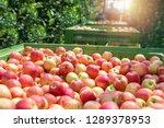 Food Farm Industry. Harvesting...