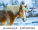 portrait of brown and white... | Shutterstock . vector #1289396566