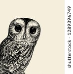 Cute Owl Illustration. Retro...