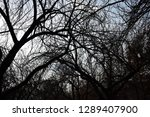 intertwined branches  both...   Shutterstock . vector #1289407900