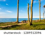 coastal forest on the baltic... | Shutterstock . vector #1289512096