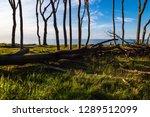 coastal forest on the baltic... | Shutterstock . vector #1289512099