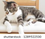 cat sitting on the chair   Shutterstock . vector #1289522530