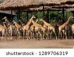 safari world  bangkok  thailand ...   Shutterstock . vector #1289706319