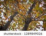 beech tree leaves close up | Shutterstock . vector #1289849026