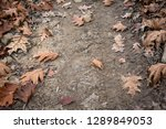 close up of brown marple leaves ... | Shutterstock . vector #1289849053