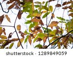 close up of colorful chestnut... | Shutterstock . vector #1289849059
