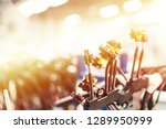 bunch of wiring harnesses.... | Shutterstock . vector #1289950999