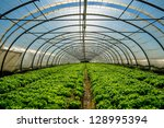 young plants growing in a very... | Shutterstock . vector #128995394