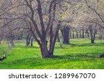 beautiful spring landscape ... | Shutterstock . vector #1289967070