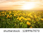 closeup heap of the wild... | Shutterstock . vector #1289967073