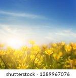 beautiful wild yellow flowers... | Shutterstock . vector #1289967076