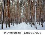 snowbound road through the pine ... | Shutterstock . vector #1289967079