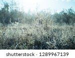 closeup frozen prairie grass at ... | Shutterstock . vector #1289967139