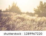 bright colorized prairie in the ... | Shutterstock . vector #1289967220