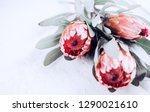 protea flowers bunch. blooming... | Shutterstock . vector #1290021610