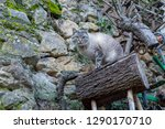 A Cat On Top Of A Trunk
